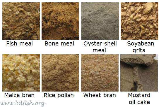 Some common fish feed ingredients